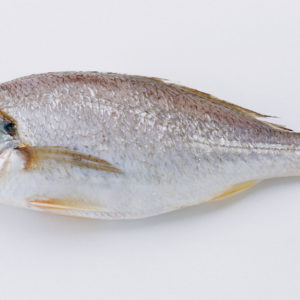 Croaker-Fish